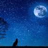 Krzysztof Mrzygłód - The Starry Night