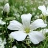 Wildflower Sheryl Crowe cover
