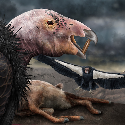 Lead ammunition still kills California condors