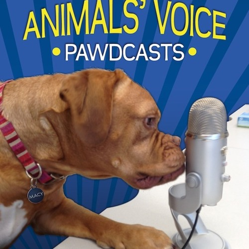 Life With a Service Dog and PTSD(Part 2)-Ontario SPCA Animals' Voice Pawdcast- Season 4, Episode 12