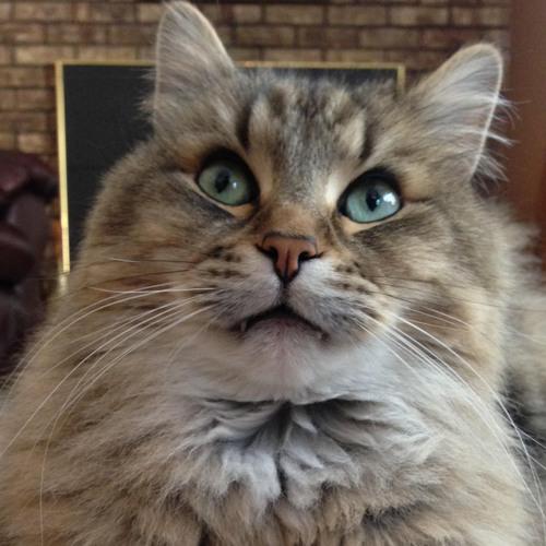 hdmi extenders cat 5