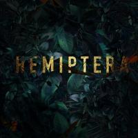 LeMarquis - Hemiptera