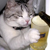 KȨNNY CHȨSNEY vs. TOBY KEITH, TIM McGRĄW, ĄLAN JACKSON & TĄYL0R SWlFT - Meow Mashup