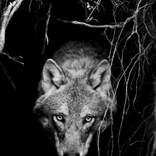 06 O vlcich krysach a konich [CD Pol nedostupnosti/2014]