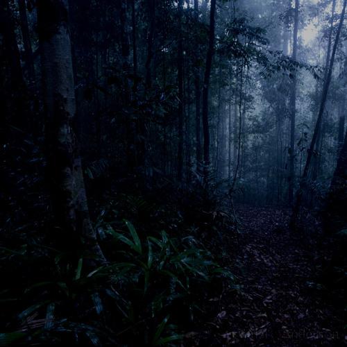 Midnight in Borneo's Rainforest - Sarawak, Malaysia