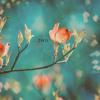 The Flourish : Away