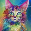Minnesota - Kitty Kat (Unreleased)