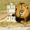 """This is a Moment in History."" The Silver Lining of Cecil the Lion"