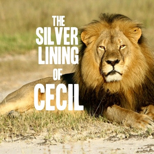 """""""This is a Moment in History."""" The Silver Lining of Cecil the Lion"""