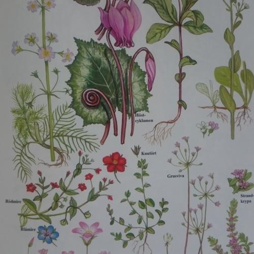 Sveriges flora