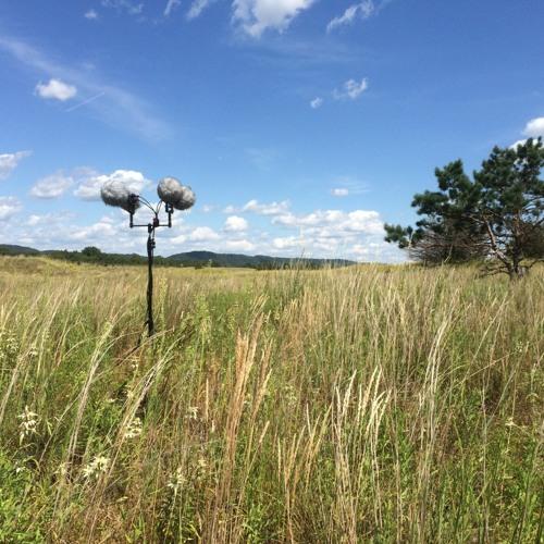 Grassland Prairies Web Demo