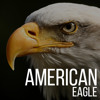 American Eagle (Demo Cut)