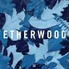 Etherwood - The Rain Will Fall (feat. LSB) [clip]