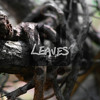 Two Down // Leaves (from The Two Lost Boys)