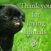 Love Us Not Eat Us - Save Aminals Life - By Gasabaa