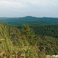 Squirrel sounds - Ouachita Mountain Forest