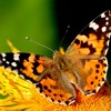 Butterfly Cry DEMO https://youtu.be/jQCv47kOmx0