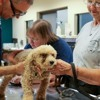 Seventy-eight animals rescued from inhumane conditions