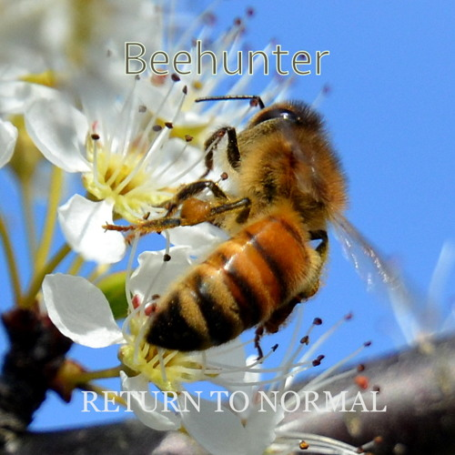 Beehunter - Return to Normal