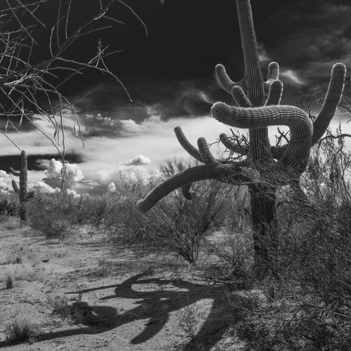 Desert Nocturne 2015-01