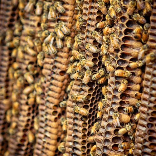 Natural Beekeeping: Thomas B. Seeley Interview