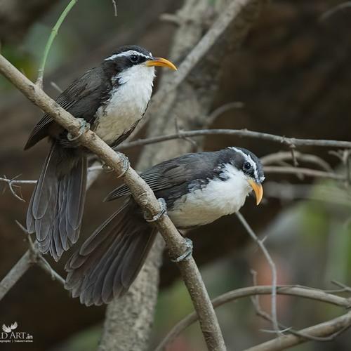 Sneak Peak: Birds of Southwest India