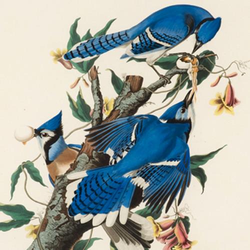 Aviary International