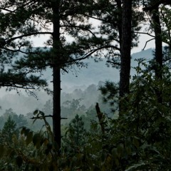 Cricket Sept 5, 2015 Wildcat Mountain Trail, Ouachita Mountains, Arkansas, USA