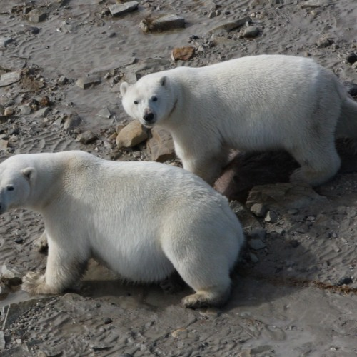 News Round-up: Testing Ocean DNA, Americans Pass a Science Quiz, and Polar Bear Diets