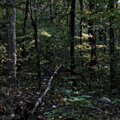 Pileated woodpecker, central Arkansas, Sept 13, 2015