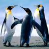 Download Tobu   Marcus Mouya Running Away [NCS Release] -5498756 Mp3