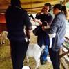 Anglia Goat Farm