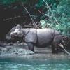TN Ujung Kulon Incar Suaka Cikepuh Sebagai Habitat Baru Badak Jawa mp3