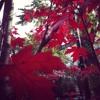 LYON-FOUR SEASONS-Autumn: Leaves (IV) *VIDEO ON YOUTUBE*