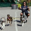 Urban Sled Dogs-