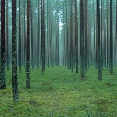 Forest reverb - impulse response