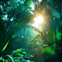 Pura Vida – Tropical Forests of Costa Rica Sound Effects Artwork