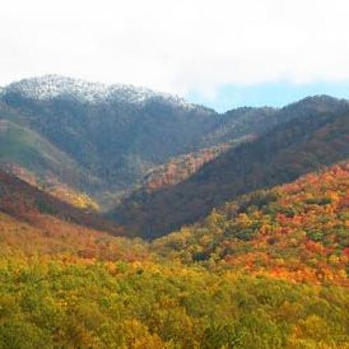 Autumn Mountain Harvest