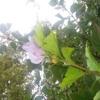 Bloom to Something Beautiful