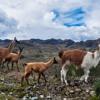 AgroEnlace:  Los bosques de la región andina, mucho más que madera. P.2. Octubre 30, 2014.