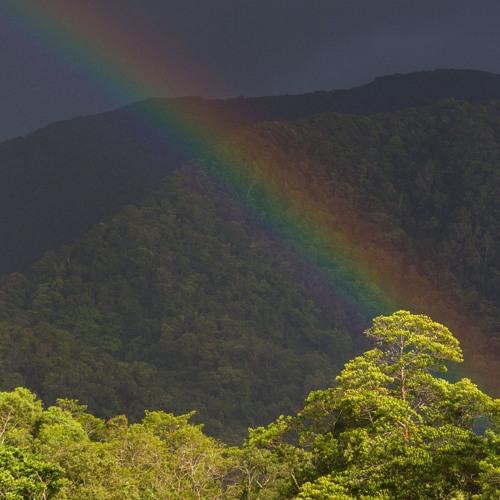 Mt. Lewis Rainforest, QLD, Australia