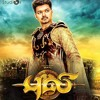 Ep. 30 - Review of Puli