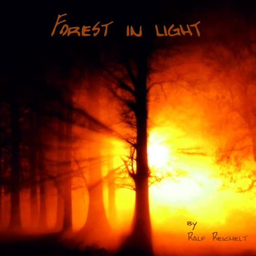 Forest In Light