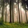 Boadicea (TRRPN Remix) - Enya [DOWNLOAD LINK IN DESCRIPTION]