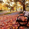 Autumnal Melody - 15 Equal Temperament