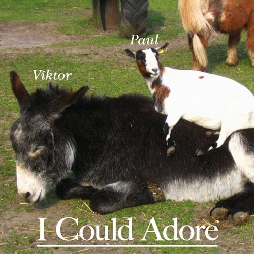 I Could Adore