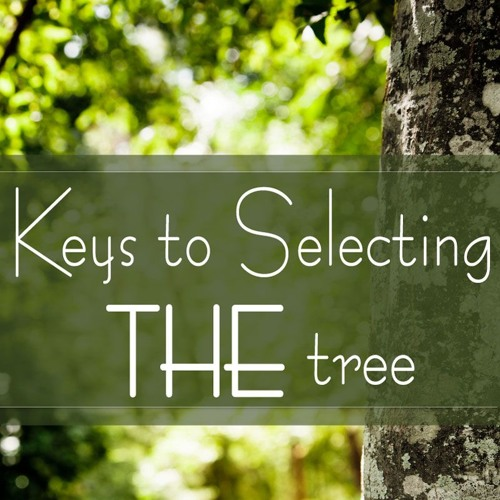 Keys to Selecting THE Tree