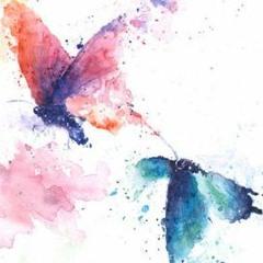 butterflies rmx