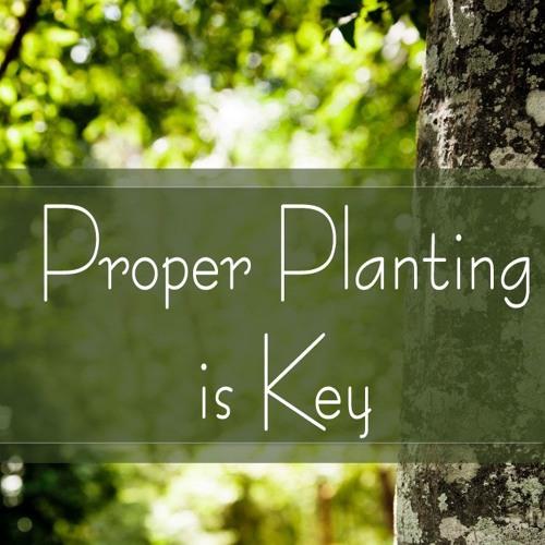 Proper Planting is Key