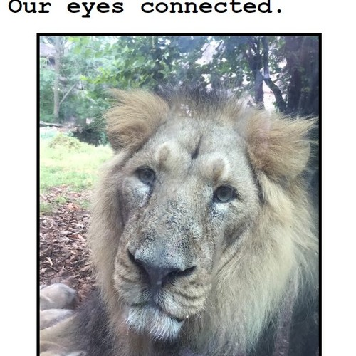 Our Eyes Connected